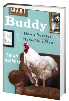 Crown: Buddy: How a Rooster Made Me a Family Man by Brian McGrory