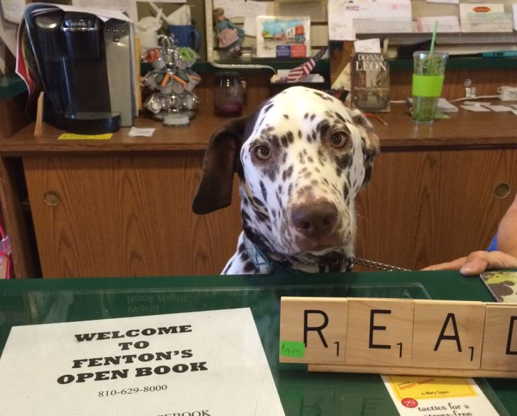 stormy fenton's bookstore dog